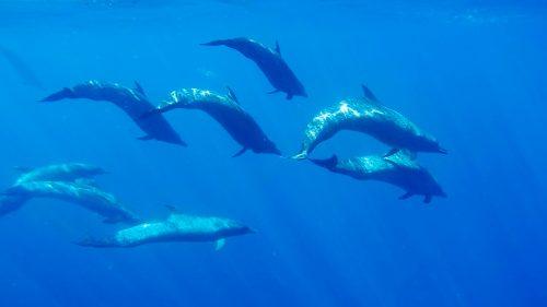waterbaby.dolphins.underwater
